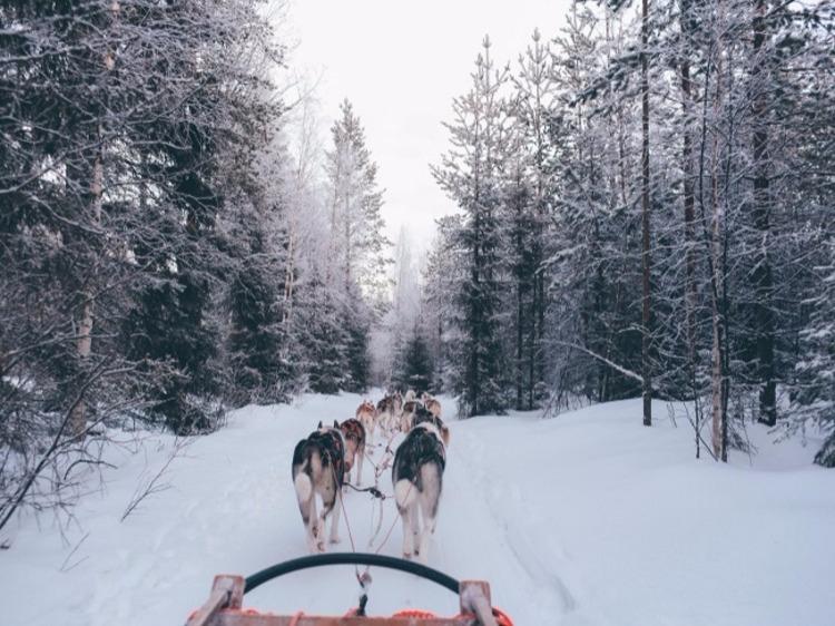 Singlereis Wintersport Lapland ZWEDEN