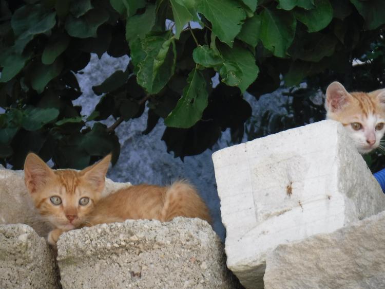 Eenoudervakantie Zonvakantie AMMOUDIA IN GRIEKENLAND