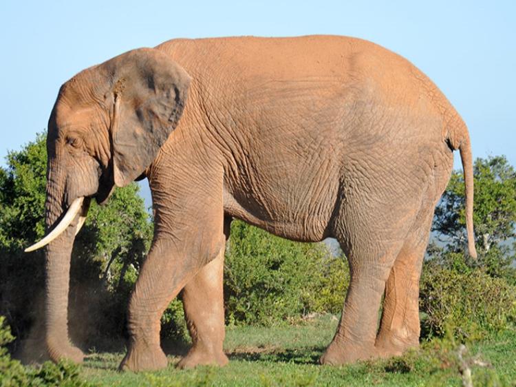 Singlereis Zuid-Afrika Kaapstad-Kruger N.P. 15-DAAGSE RONDREIS