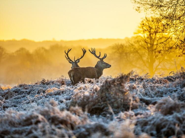 Singlereis Actieve winterreis IN DE VELUWE