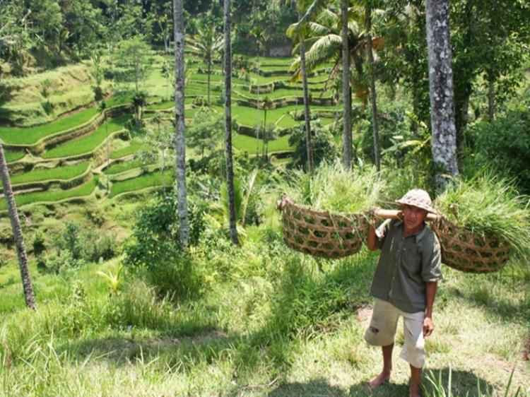 Singlereis Indonesië: Soenda eilanden 22-DAAGSE RONDREIS
